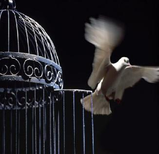 caged-bird